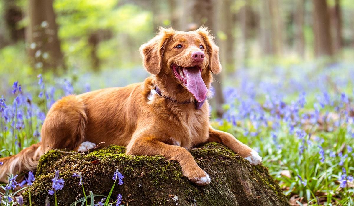 Kleiner Jagdhund liegt auf einem Baumstamm im Wald